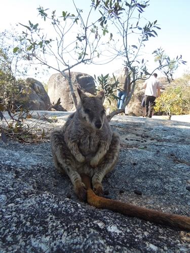 オーストラリア6