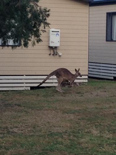 オーストラリア8