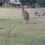 【オーストラリア08】ケアンズからゴールドコーストへ!この道は自然の宝庫?
