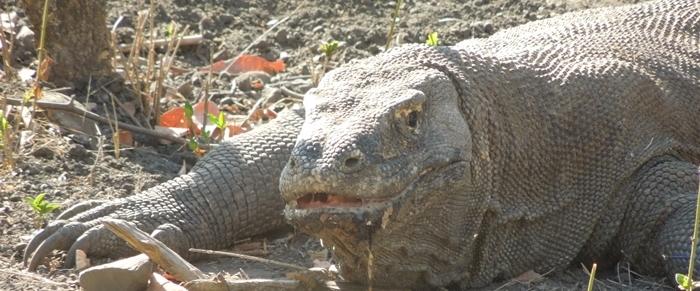 世界遺産のコモド国立公園でドラゴンに出会った~!