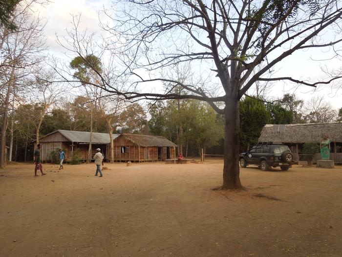 キリンディ森林保護区 過酷な道の先には。。シファカとの出会い (6)