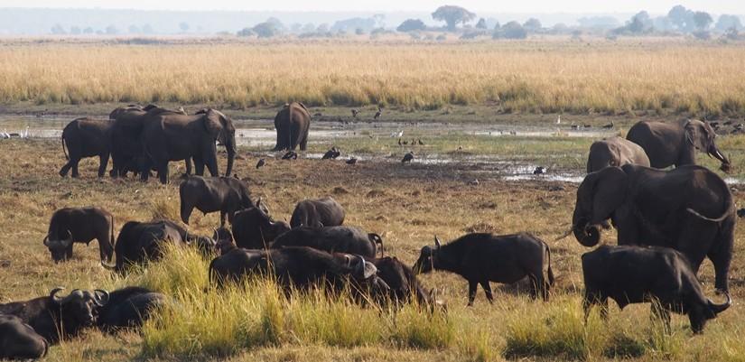 【ボツワナ02】ゾウの楽園チョベ国立公園でボートサファリ!