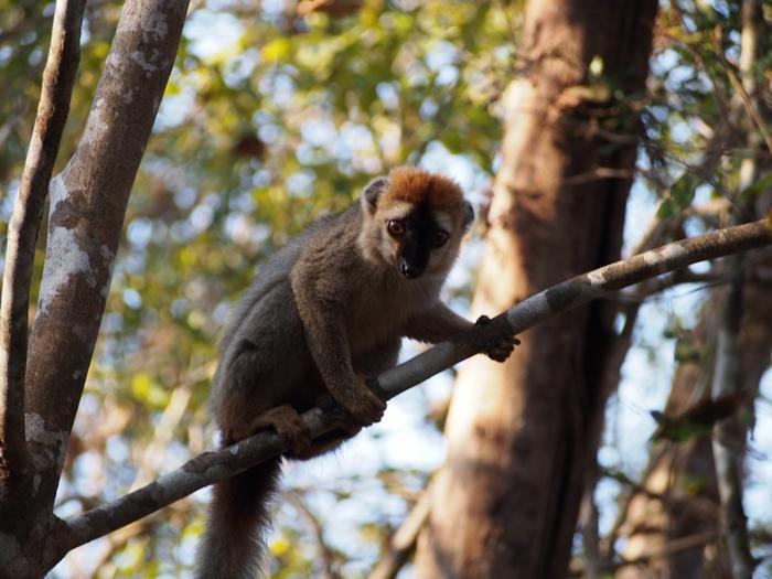 キリンディ森林保護区 過酷な道の先には。。シファカとの出会い (29)