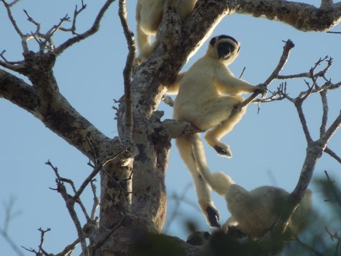 キリンディ森林保護区 過酷な道の先には。。シファカとの出会い (12)