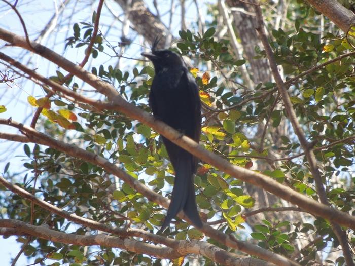 キリンディ森林保護区 過酷な道の先には。。シファカとの出会い (23)