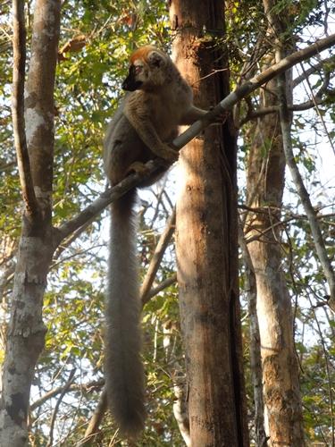 キリンディ森林保護区 過酷な道の先には。。シファカとの出会い (13)