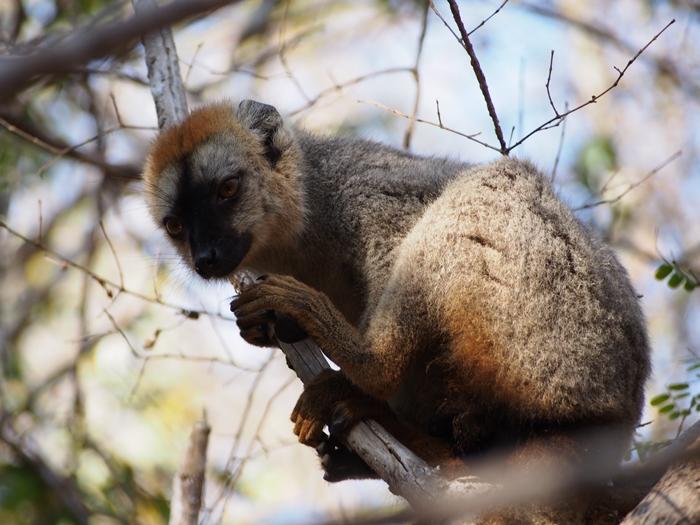 キリンディ森林保護区 過酷な道の先には。。シファカとの出会い (37)