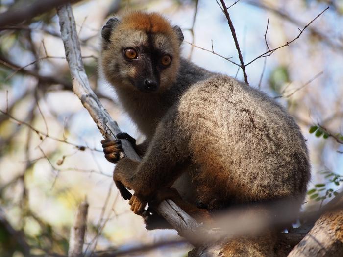 キリンディ森林保護区 過酷な道の先には。。シファカとの出会い (38)