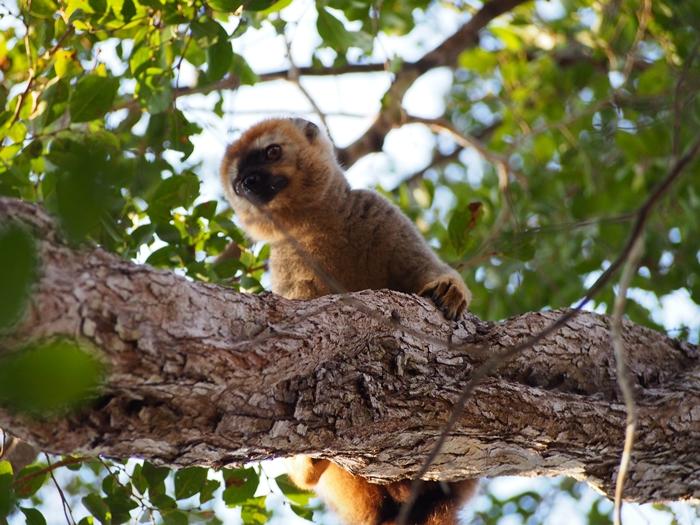 キリンディ森林保護区 過酷な道の先には。。シファカとの出会い (32)
