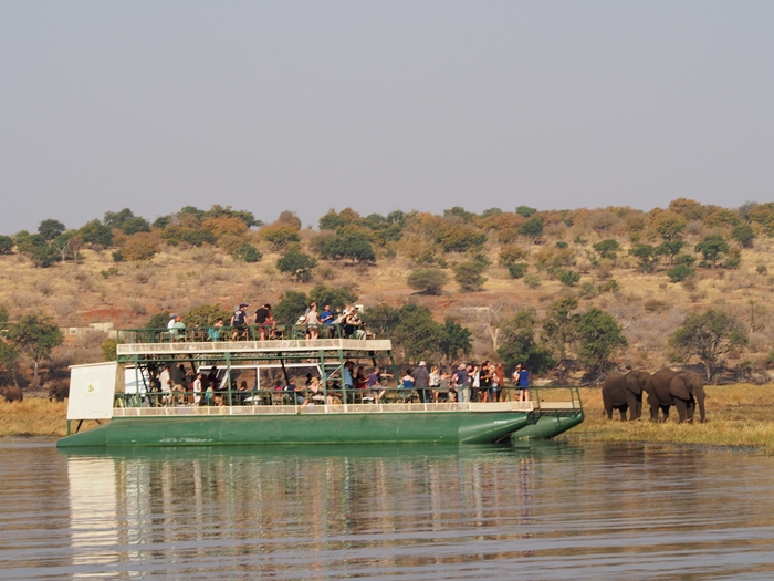 ゾウの楽園チョベ国立公園でボートサファリ! (36)
