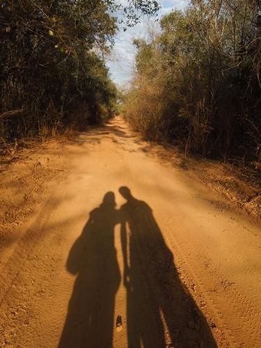 キリンディ森林保護区 過酷な道の先には。。シファカとの出会い (4)