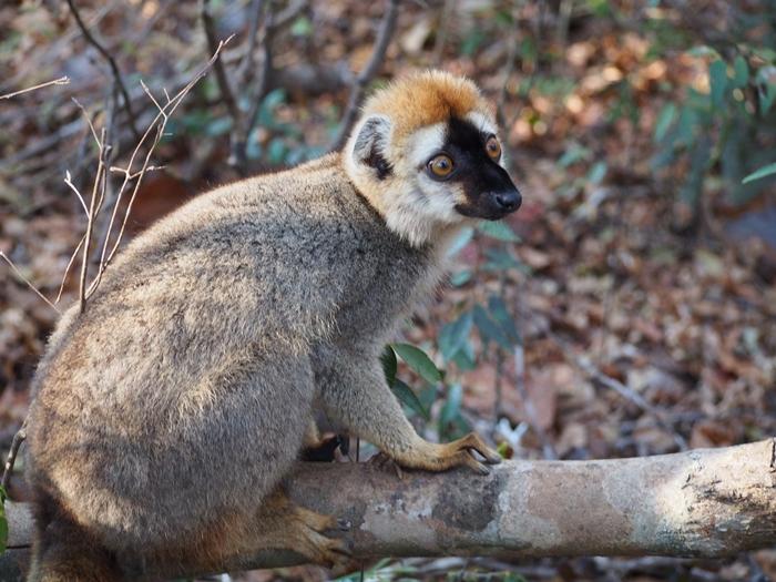 キリンディ森林保護区 過酷な道の先には。。シファカとの出会い (31)