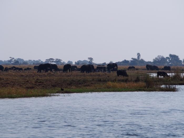 ゾウの楽園チョベ国立公園でボートサファリ! (16)