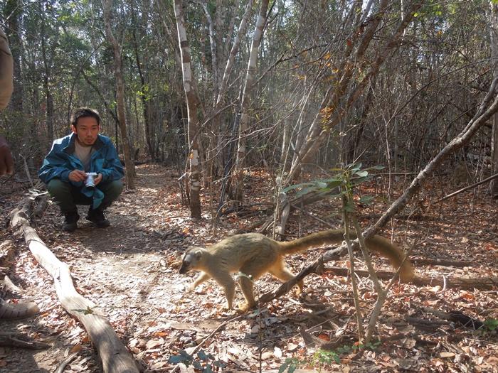 キリンディ森林保護区 過酷な道の先には。。シファカとの出会い (20)