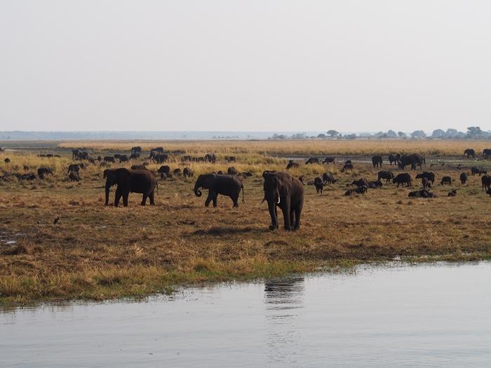 ゾウの楽園チョベ国立公園でボートサファリ!