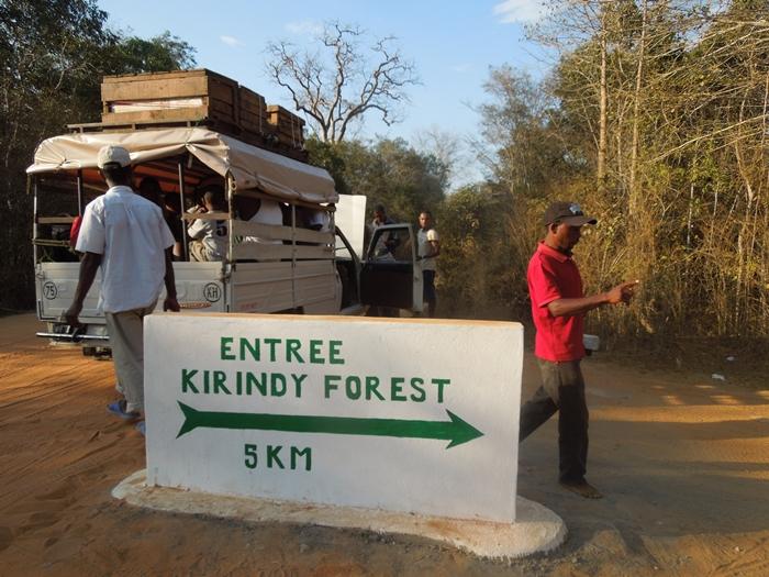 キリンディ森林保護区 過酷な道の先には。。シファカとの出会い (3)