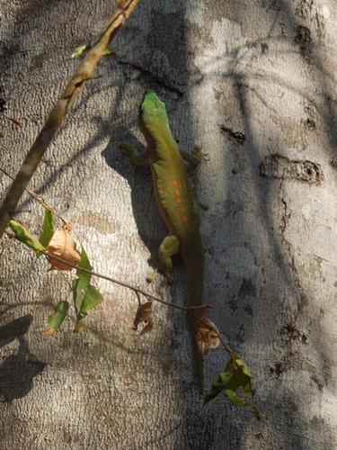 キリンディ森林保護区 過酷な道の先には。。シファカとの出会い (15)