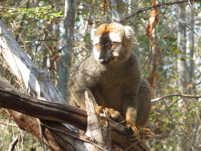 キリンディ森林保護区 過酷な道の先には。。シファカとの出会い (18)