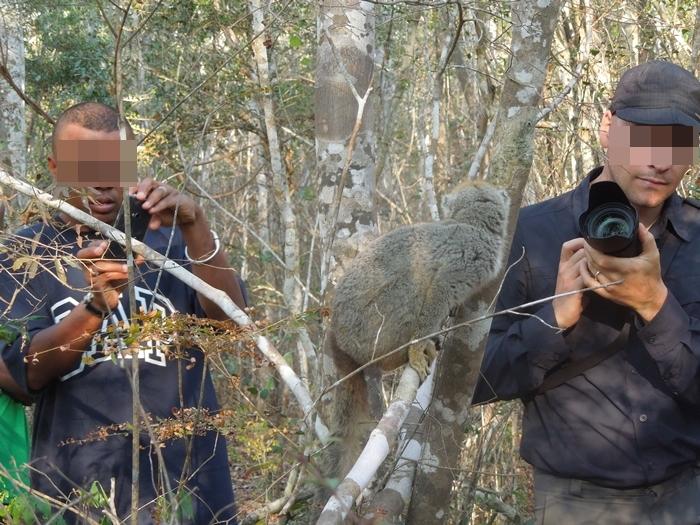 キリンディ森林保護区 過酷な道の先には。。シファカとの出会い (40)