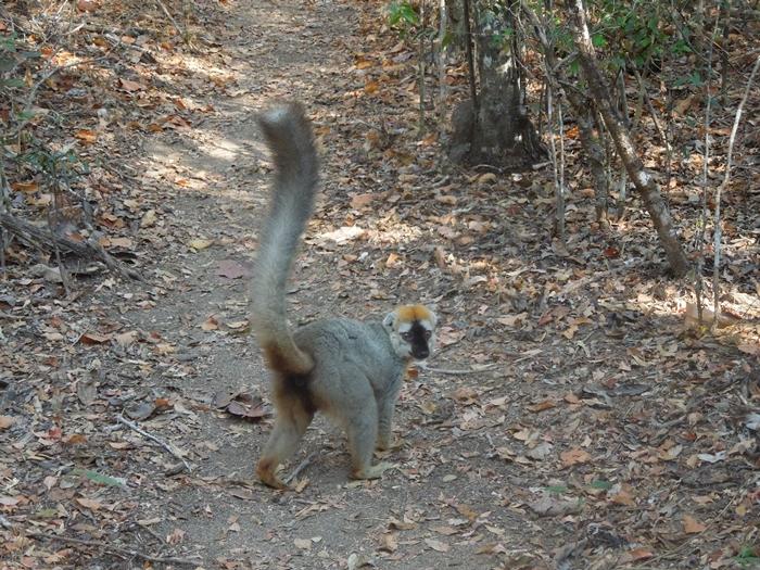 キリンディ森林保護区 過酷な道の先には。。シファカとの出会い (21)