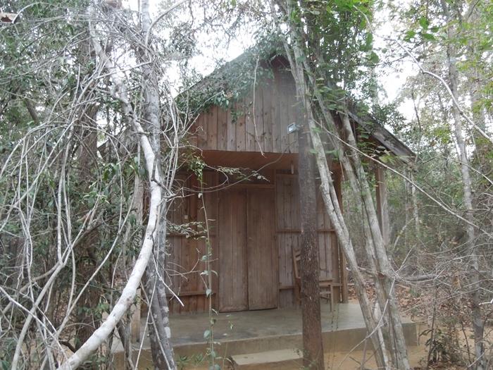 キリンディ森林保護区 過酷な道の先には。。シファカとの出会い (7)
