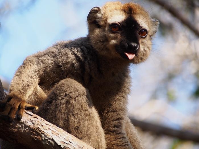 キリンディ森林保護区 過酷な道の先には。。シファカとの出会い (39)