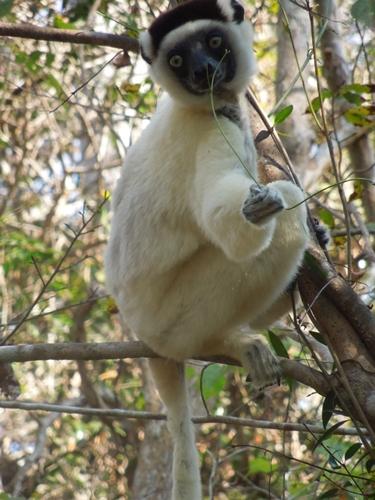 キリンディ森林保護区 過酷な道の先には。。シファカとの出会い (17)