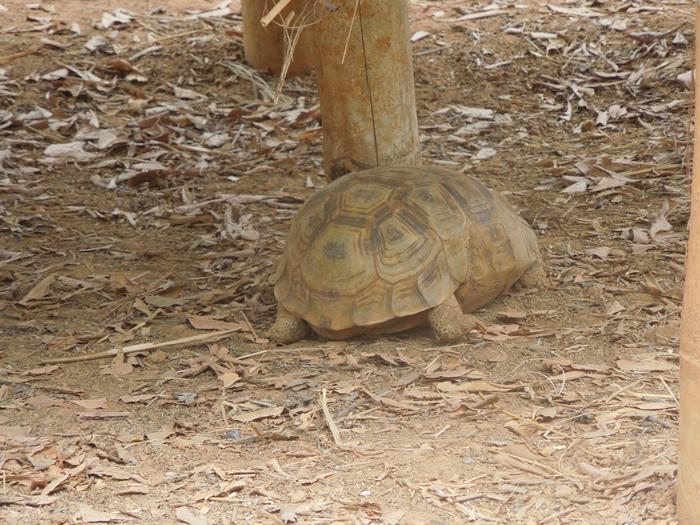 放し飼いのキツネザル園 アンタナナリボのレミュールパーク (26)