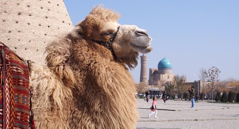 【ウズベキスタン12】こじんまりした世界遺産の街ブハラ☆スザニをお土産に!