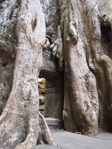世界遺産アンコール遺跡群2 アンコールトム、そしてタプローム