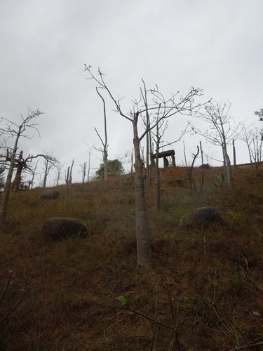 放し飼いのキツネザル園 アンタナナリボのレミュールパーク (2)