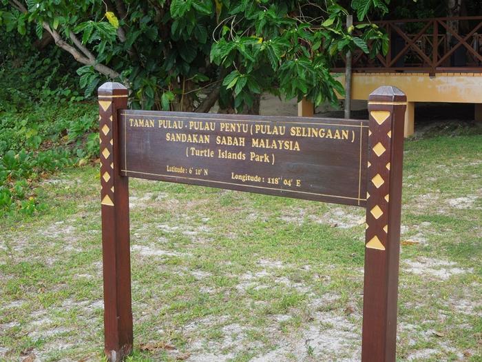 世界一のカメ島・セリンガン島 通称タートルアイランド (6)