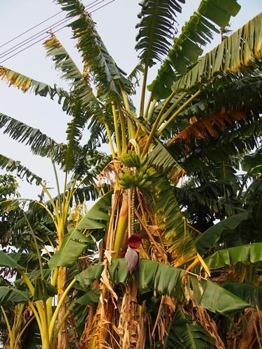 世界遺産を独り占め!パラグアイ唯一の世界遺産 トリニダー遺跡 (40)