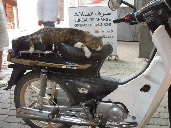 【モロッコ10】世界遺産マラケシュで世界三大ウザい国の意味を実感した日 (14)