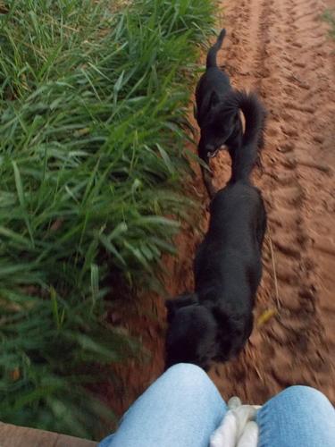 ブラジルで農業体験!~弓場農場の一日~ (10)
