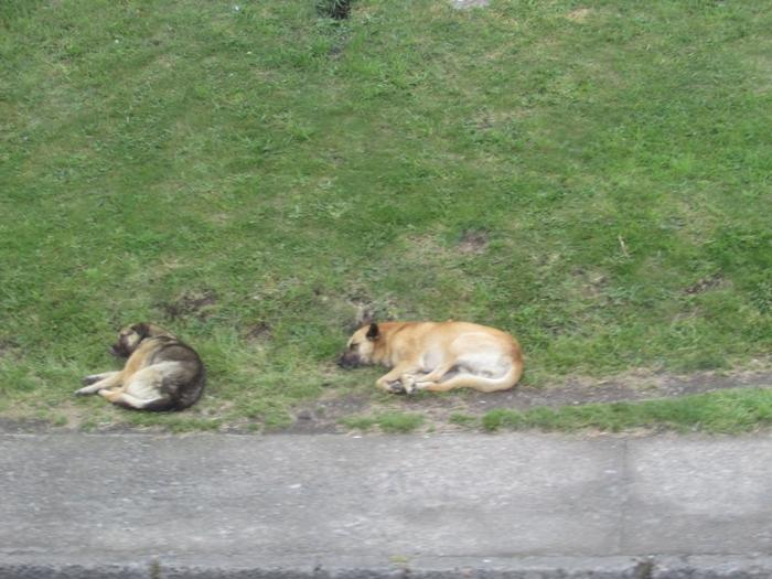 【チリ08 世界遺産】カラフルなカストロ(チロエ島)の町歩き (3)