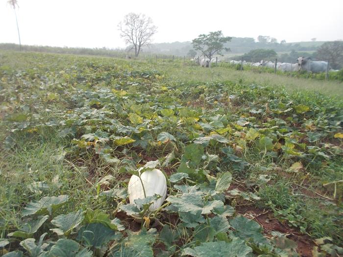 ブラジルで農業体験!~弓場農場の一日~ (3)