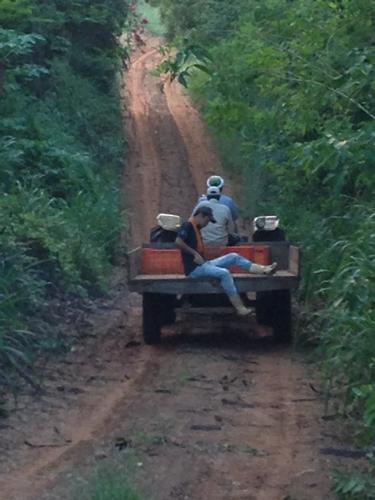 ブラジルで農業体験!~弓場農場の一日~ (31)
