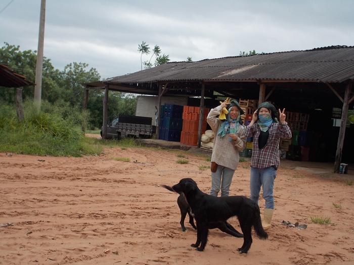 ブラジルで農業体験!~弓場農場の一日~ (13)