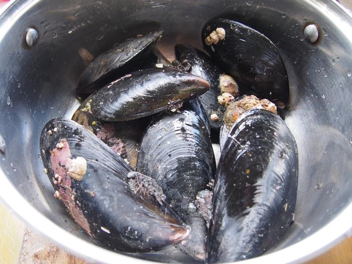 【チリ07】サーモン!ムール貝!!ウニ!!!チロエ島で海産物三昧の日々 (22)