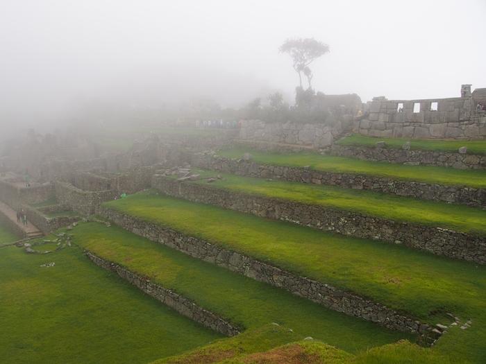 【ペルー06 世界遺産】雨降りしきる空中都市マチュピチュ (28)