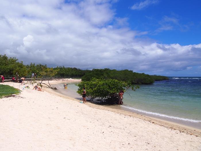 【エクアドル03】世界でここだけ!イグアナと泳げるビーチ。ガラパゴスPart2(サンタクルス島) (24)