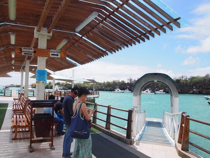 【エクアドル03】世界でここだけ!イグアナと泳げるビーチ。ガラパゴスPart2(サンタクルス島) (17)