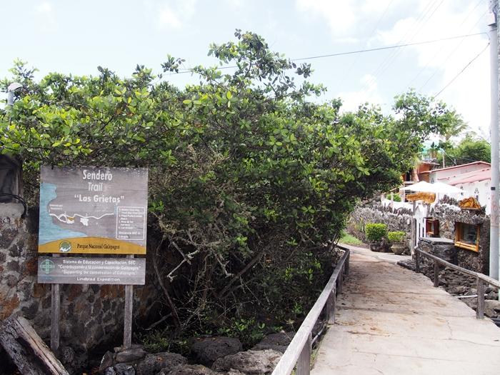 【エクアドル03】世界でここだけ!イグアナと泳げるビーチ。ガラパゴスPart2(サンタクルス島) (19)