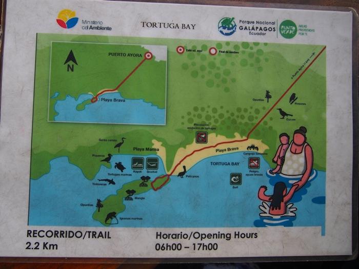【エクアドル03】世界でここだけ!イグアナと泳げるビーチ。ガラパゴスPart2(サンタクルス島) (35)