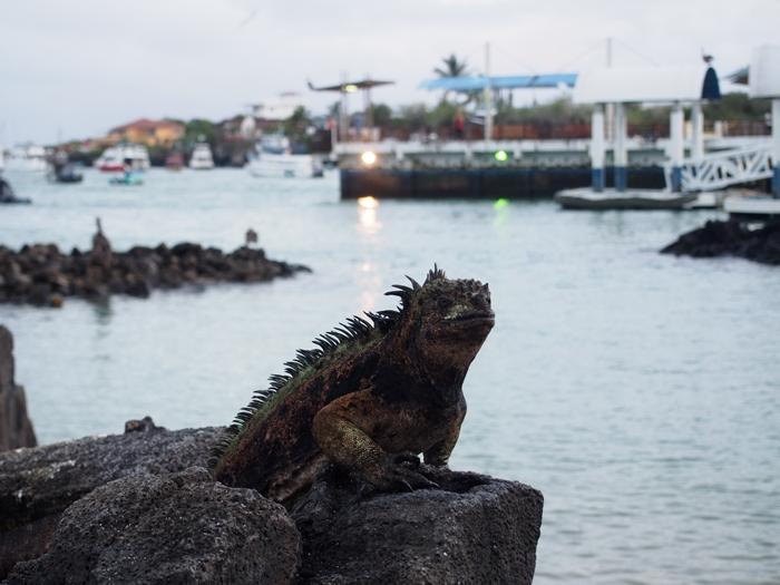 【エクアドル04】プエルト・アヨラサンタクルス島の宿、レストラン、移動情報などあれこれ ガラパゴスPart3 (22)
