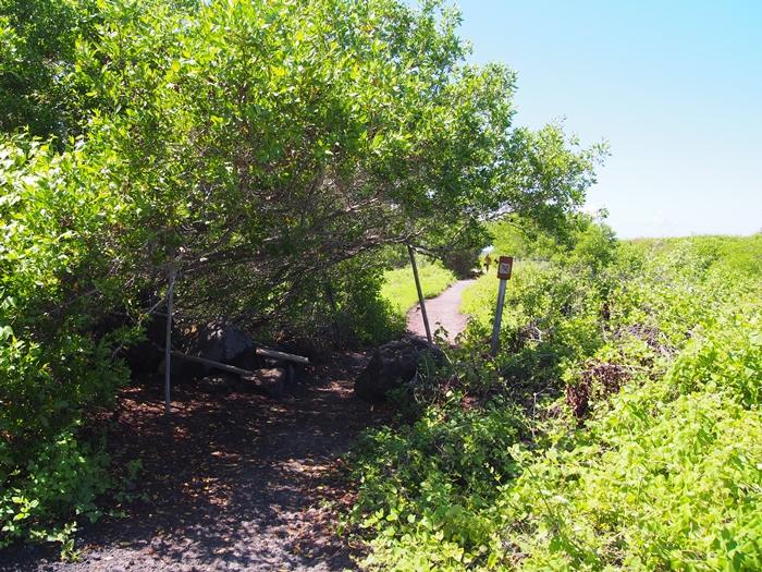 【エクアドル05】アシカに首ったけ!ガラパゴスPart4(サンクリストバル島) (37)