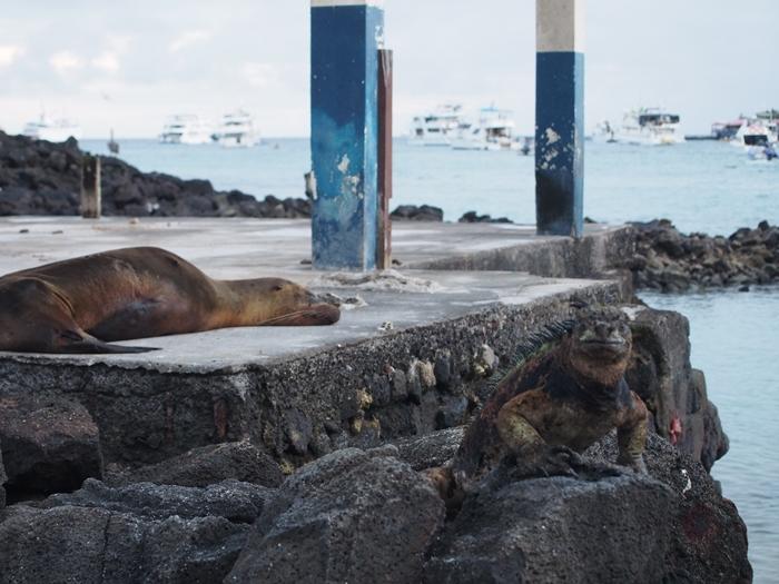 【エクアドル04】プエルト・アヨラサンタクルス島の宿、レストラン、移動情報などあれこれ ガラパゴスPart3 (21)