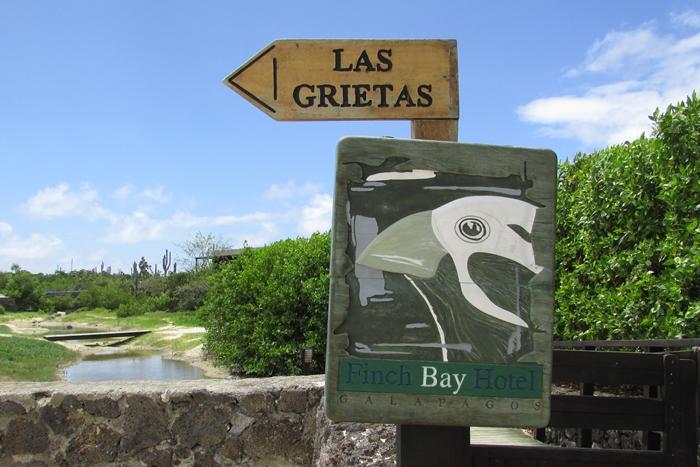 【エクアドル03】世界でここだけ!イグアナと泳げるビーチ。ガラパゴスPart2(サンタクルス島) (13)