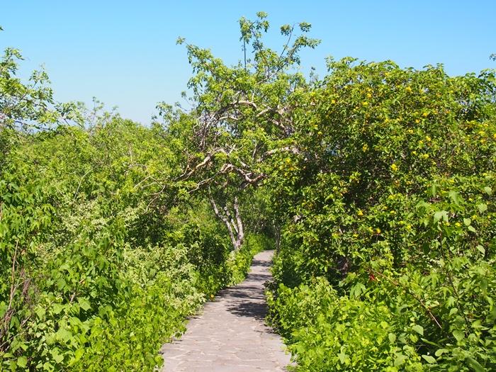 【エクアドル05】アシカに首ったけ!ガラパゴスPart4(サンクリストバル島) (43)